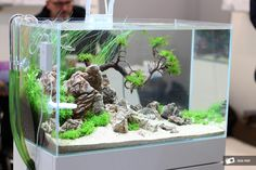 Very nice, clean setup in a small tank simonsaquascapeblog: Favourites: tank at Interzoo 2014 This one could be seen by the Twinstar booth. Photo credit by Oleg Foht
