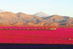 Résultats de recherche d'images pour «Fleurs Paysages désert du chili»
