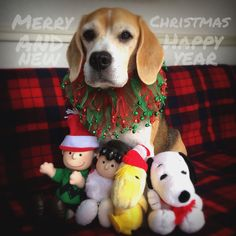 Beagle the Charlie with Mcdonald's Snoopy, We wish you a merry Christmas And a happy New Year!✨
