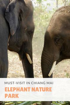 Must-Do Activities in Thailand. Visit the Elephant Nature Park in Chiang Mai. Elephant Face, Elephant Shower, Thailand Honeymoon, Thailand Travel, Chiang Mai, Laos, River Bath, Pet Insurance Reviews, Akc Breeds
