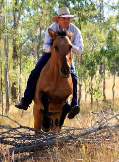 This is my dream riding bareback in a forest jumping I would love to have a horse(hint hint) Bareback Riding, Cowboys And Angels, Horse Tail, All About Horses, Most Beautiful Animals, Horse Quotes, Breyer Horses, Horse Training, Horse Pictures