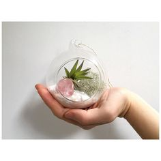"Rose Quartz for unconditional love These 'Love' air plant terrarium kits are now listed in my @etsy shop just in time for Valentines Day  Link in bio  Talking of love Caitlin Moran on Desert Island Discs this morning: ""Life is about cramming in as much joy as possible"""