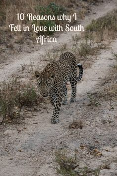 10 Reasons why I Fell in Love with South Africa   http://www.silverspoonlondon.co.uk/2015/07/10-reasons-why-i-love-south-africa.html