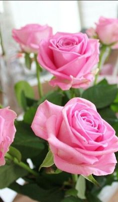 All the things I Love!and PINK! Cats & Pretty things too. Roses Pink, Beautiful Pink Roses, Love Rose, Tea Roses, Pretty Flowers, Pretty In Pink, Every Rose, My Flower, Flower Power