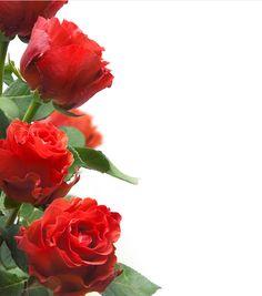 postales con flores - Cerca amb Google