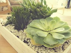 As plantas são muito importantes na hora de decorar nossa casa. Não importa qual o estilo que você vai escolher, elas servem para qualquer tipo de ambiente. As cores [...]