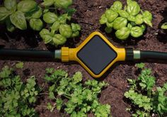 Edyn smart garden system exploits the hotness of the sun to power itself. This pleasant little garden gadget monitors and tracks ecological conditions to permit your plants to flourish.