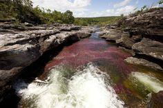 Caño Cristales-Crystal River in Colombia.