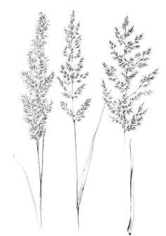 Set 4 spikelet sketch Botanical Art Print Hygge digital stamp clipart one line drawing grass artwork wild herb black white plant Botanical Tattoo, Botanical Drawings, Botanical Prints, Botanical Line Drawing, Grass Drawing, Drawing Flowers, Tattoo Line, Wild Grass, White Plants