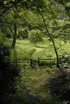 Nature Photography Green Pathways 66 New Ideas Country Life, Country Roads, Country Living, Farm Life, Pathways, Belle Photo, Beautiful Landscapes, The Great Outdoors, Woodland