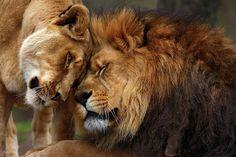 http://www.whatawaytogomovie.com/wp-content/uploads/2013/03/lions-in-love-emmanuel-panagiotakis.jpg