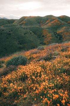 The Best Places To See Wildflowers in Southern California <br> With another super bloom in the hills in SoCal are full of color. Find out the best places to see wildflowers in Southern California! Nature Aesthetic, Flower Aesthetic, Orange Aesthetic, Beautiful World, Beautiful Places, Nature Landscape, Landscape Photos, Summer Landscape, Adventure Is Out There