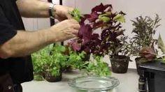 hanging hydroponics - YouTube