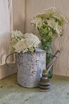 Beautiful Queen Annes Lace in galvanized watering can