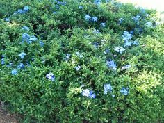 Las Flores del centro envejeciente de Fort Lauderdale,  Florida.  Hoy 18 Octubre n 2014