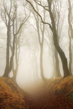 Forest road. Autumn in the Ore mountains.  www.danielrericha.cz Автор: Daniel Řeřicha