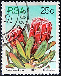 Issued of May R S A Protea Grandiceps. South Afrika, Pocket Page Scrapbooking, Protea Flower, Vacation Scrapbook, Postage Stamp Art, Flower Stamp, Vintage Stamps, Photo Wall Collage, African Animals
