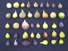 Figs Fig Recipes, Orange Recipes, Pancake Recipes, Breakfast Waffle Recipes, Breakfast Pizza, Breakfast Bowls, Growing Vegetables, Fruits And Veggies, Vegetable Garden