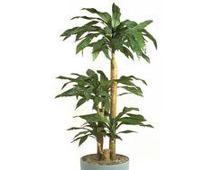 Dracaena fragrans :Ένα από τα φυτά που προτείνει η Nasa! από τα πιο όμορφα φυτά εσωτερικού χώρου κατάλληλο για νέα μοντέρνα σπίτια. Artificial Floor Plants, Flooring, Nasa, Floral, Polyvore, Design, Home Decor, Decoration Home, Room Decor