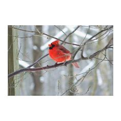 Cheery Red Cardinal Wrapped Canvas Print