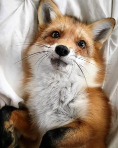 The Crazy-Cute Animals You Aren't Following on Instagram Yet: @juniperfoxx