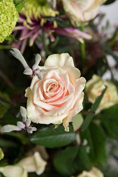 Rose Talea+ by Fresh Flowers, Roses, Bloom, Bridal, Plants, Beautiful, Pink, Bride, Rose