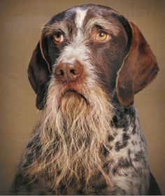 Adult Dog Training – What To Expect From Your Dog As He Reaches His Adult Years