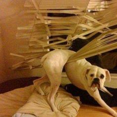 The Blinds Started It. | #funnydog #funnyanimals #animals #dogs #cats #funnycats #humor #trap #cute