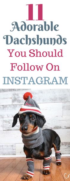 Who doesn't love dachshunds?! These doxies have amazing pictures on Instagram that show them as a puppy, funny pictures, training, cute pictures, gifts, and more! See long haired, dapple, miniature,wirehaired and mix weiner dogs with these IGs