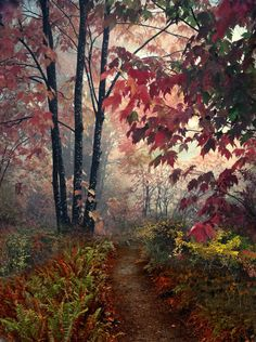 Forest Path, The Enchanted Wood ~ alittle
