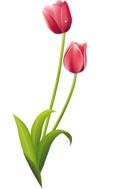 Watercolor Wallpaper, Flower Wallpaper, Watercolor Flowers, Iris Painting, Stone Painting, Tulip Drawing, Beautiful Flowers Wallpapers, Nature Artwork, Islamic Art Calligraphy
