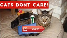 😸 Cats Dont Care Funny Pets Videos Best Funny Cat Videos Ever 😹 Cats really just dont care Funny Pet Videos brings you the best funny…