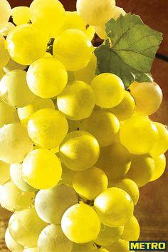 Fruit du terroir du Sud-Ouest, le raisin Chasselas de Moissac est un produit phare de la gastronomie régionale. Cultivé sur un terroir de coteaux vallonnés où il se gorge de soleil, ce prestigieux raisin blanc puise dans des terres fortes argilo-calcaires et dans le soleil du Sud son caractère unique