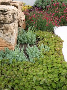 Drought Tolerant Garden Design, Pictures, Remodel, Decor and Ideas - page 6