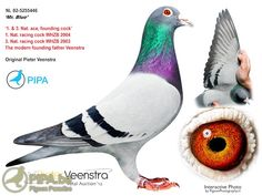 The bloodlines of Pieter Veenstra (Drachtstercompagnie, NL) are well represented…