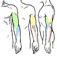 팔 그리는 방법 팔의 움직임