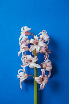 En güzel dekorasyon paylaşımları için Kadinika.com #kadinika #dekorasyon #decoration #woman #women Little pink flowers on a blue background