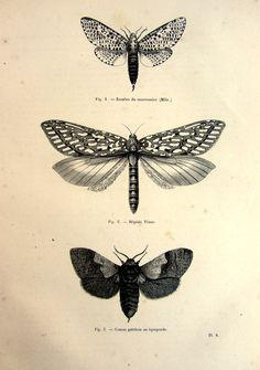 Amazing antique moths butterflies print 1860 by LyraNebulaPrints, $24.99