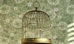 Pesquisa Como limpar uma gaiola de passarinho. Vistas 92541.