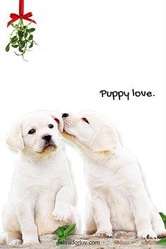 Labrador Quotes, Labrador Retriever Mix, Funny, Dogs, Labradors, Animals, Beautiful, Animales, Animaux