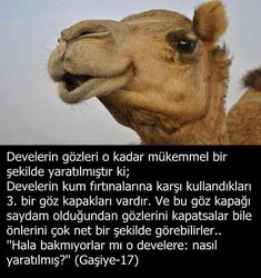 Allâh-u Ekber ☝ Allahumme Salli Ala Seyyidina Muhammedin Ve... • lailaheillallah_571