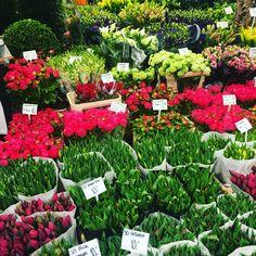 Tulips in april in markets/flowerist