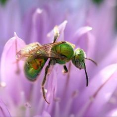 Facts at Instagram @TheCVF Color in nature by Lida. #2degree #GlobalWarming impact: #Insect migrated to strange new directions via #NationalGeographic #CVFFacts