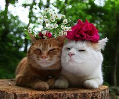 flower children ChaTora and Shiro