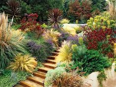 Drought tolerant, yet colorful and textured landscape. terrific example of a well planned xeriscape! Low Water Landscaping, Hillside Landscaping, Steep Backyard, Landscaping Ideas, Drought Tolerant Landscape, Dry Garden, Water Garden, Garden Path, California Garden