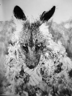 anouk griffioen wolf - Google zoeken