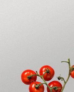 bouchees-de-langoustines-au-chili-et-canne-a-sucre