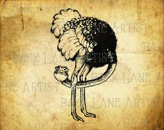 Cuite Ostrich Clipart Illustration Instant by BackLaneArtist