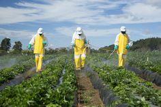 Chaque année,l'EWG (Environmental Working Group) analyse un grand nombre de fruits et légumes américains et importés, et identifie ceux qui sont leplus contaminés par les pesticides. Voici donc le FLOP 10 de l'année 2017. Essayez de favoriser le bio pour ces produits, ou à défaut prenez soin de bien les laver.