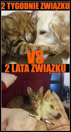 #śmieszne, #zabawne, #humor, #memy, #demotywatory, #obrazki Animals And Pets, Funny Animals, Best Memes, Funny Memes, Lol, My Photos, Facts, Humor, Cool Stuff